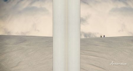 Antarctica Album - Front and Back Covers