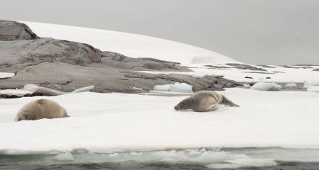 Pages 116 & 117 - Marine Mammals - Seals on ice floe