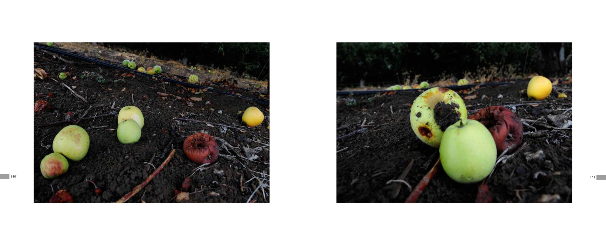 Pages 140-141: Rotting Apples