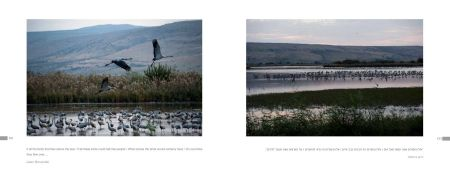 Page 132: The Hula Valley - Nature Reserve/Page 133: The Hula Valley - Bird Sanctuary