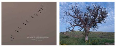Page 62: Autumn Stork Migration/Page 63 Marissa - A Lone Tree in Spring