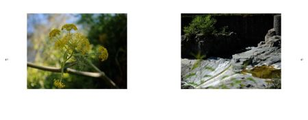 Sicily Album - Page 40: Fennel/Anise - Remedy & Spice / Page 41: Brook on Basalt