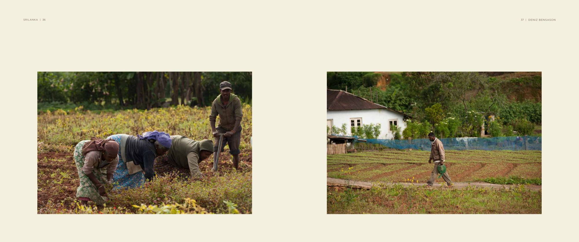 Sri-Lanka Album - Page 36: Working the Tea Fields / Page 37: On the Path