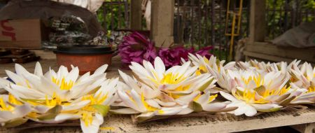 Sri-Lanka Album - Pages 130 - 131: The third offering in Buddhism is the offering of flowers