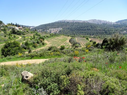 Jerusalem Trail: View of early spring flowers, fields, and Motza, nestled beneath a forest at the foot of the mountain below Jerusalem - © Deniz Bensason