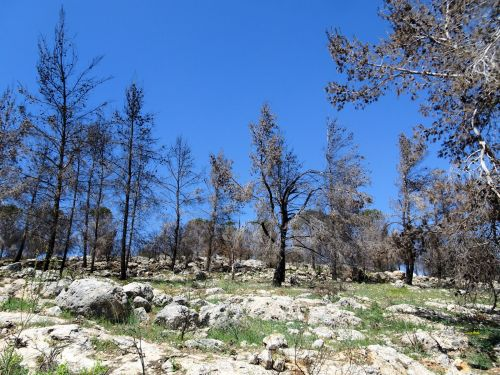 Jerusalem Trail: Devastation from forest fires - © Deniz Bensason