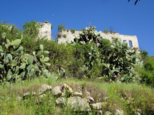 Jerusalem Trail: Lifta - Prickly cactuses, open-air houses - © Deniz Bensason
