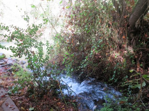Israel National Trail - Section 01: The Dan Creek