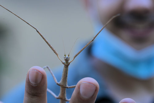 A praying mantis on two fingers