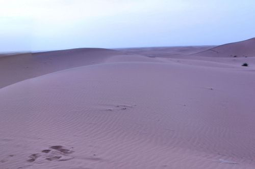 Landscape - Deserts - Early morning in the Sahara desert, Morocco