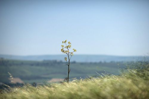 Landscapes/Grasslands & Savannas - Arbel Cliff, Israel: A solitary shrub on a windswept knoll