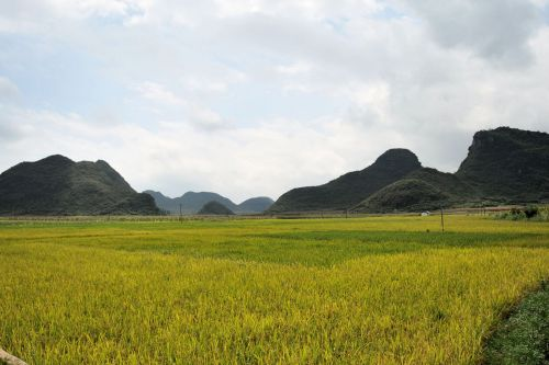 Landscapes/Grasslands & Savannas - Xingyi, Guizhou, China: Cultivating rice