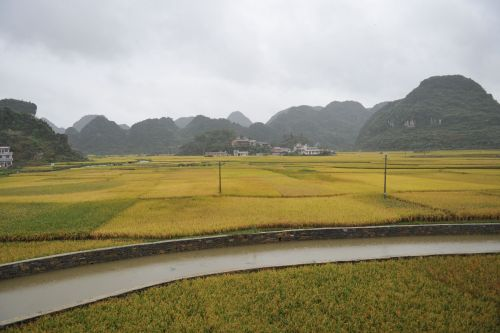 Landscapes/Grasslands & Savannas - Xingyi, Guizhou, China: Irrigation channel going through rice paddies