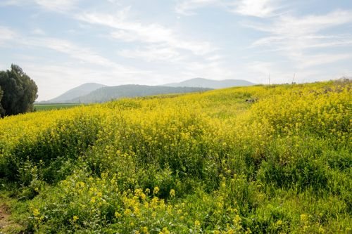 Landscapes/Grasslands & Savannas - Lower Galilee, Israel: Mount Gilboa overlooking the Jezreel Valley
