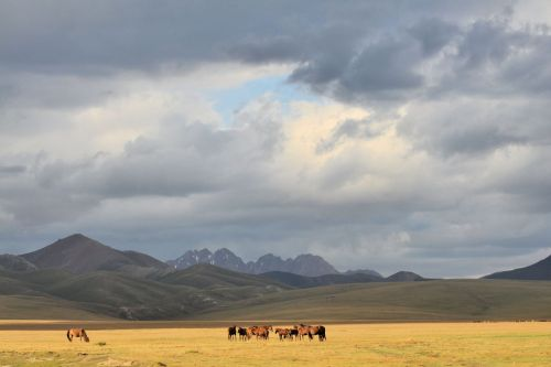 Landscapes/Grasslands & Savannas - Naryn Province, Kyrgyzstan: The Horses on the Highland Steppes around Song Köl Lake