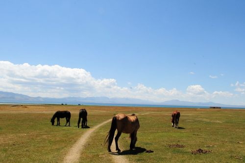 Landscapes/Grasslands & Savannas - Naryn Province, Kyrgyzstan: The Horses on the Highland Steppes