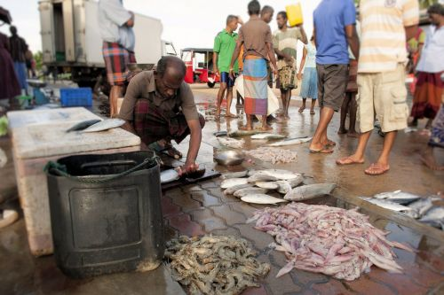 Markets: Fish & Meat - Hikkaduwa, Sri-Lanka: Fisherman 'cleans' fish on the beach-front pavement