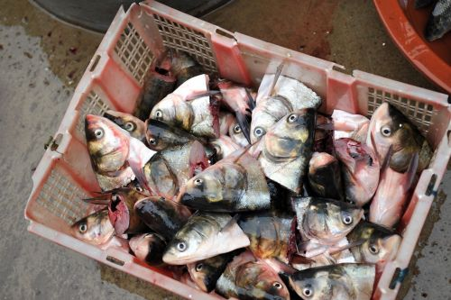 Markets: Fish & Meat - Xinglong Seafood Market, Dali, China: Carp heads in basket