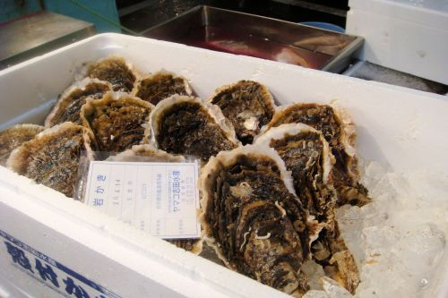 Markets: Fish & Meat - Tokyo fish market, Japan: Oysters on ice