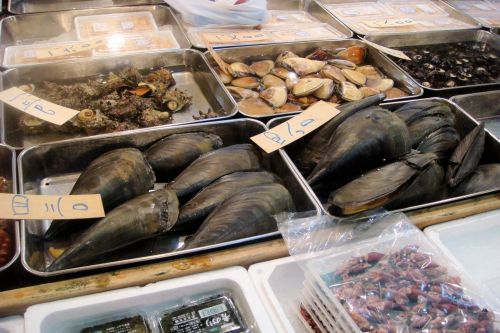 Markets: Fish & Meat - Tokyo fish market, Japan:  Different kinds of kinds of mussels and mollusks