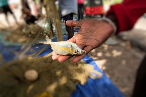 Markets: Fish & Meat - Sri-Lanka: A fish in hand is worth ….?