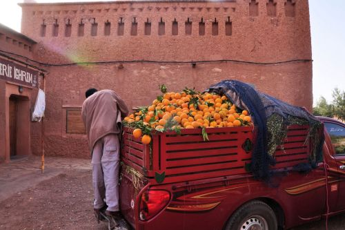 Markets: Fruit & Veg - Marrakesh, Morocco: Beyond the walls - man getting ready to go unload his oranges