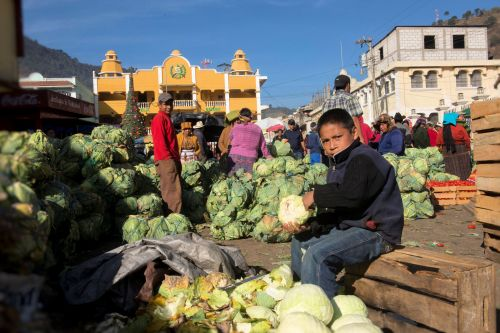 Markets-Vendors - Almolonga market, Guatemala:  Boy vs 100 cabbages