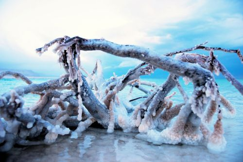 Living-Natue: The Mineral Kingdom - Israel, Dead Sea: Salt growing on dead wood, crystallization in nature