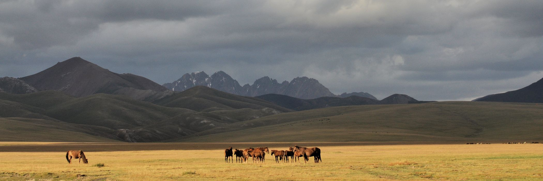 Horses on the Kyrgyz Steppe